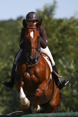 equestrian brown horse and rider jumping