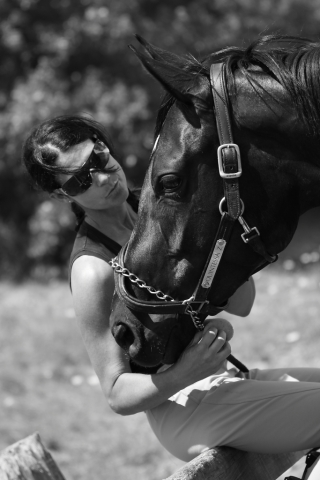 equestrian horse and rider