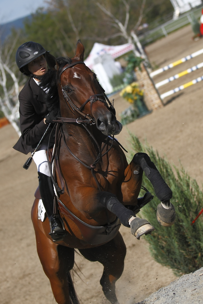 equestrian horse and rider jumping